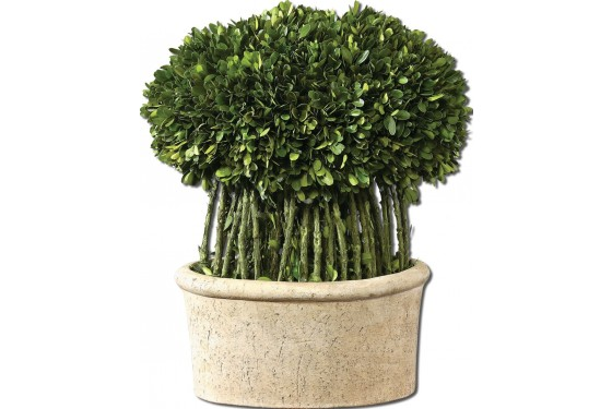 Willow Topiary Preserved Boxwood Media Image 1