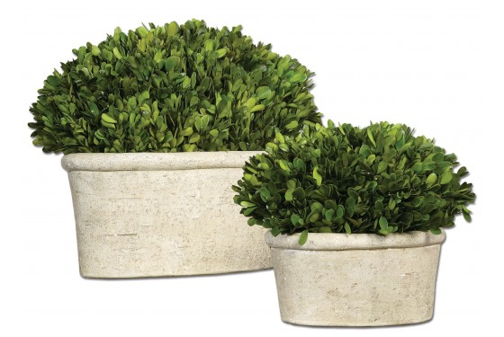 Oval Domes Preserved Boxwood - Set of 2 Media Image 1