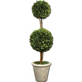 Two Sphere Topiary Preserved Boxwood