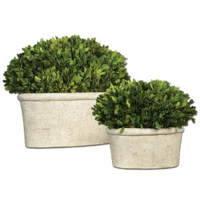 Oval Domes Preserved Boxwood - Set of 2