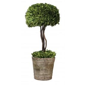 Tree Topiary Preserved Boxwood